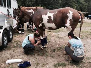 horse-camp-03